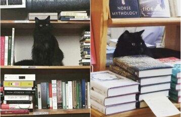 Katinui pasisekė: benamis gyvūnas tapo mylimiausiu knygyno darbuotoju