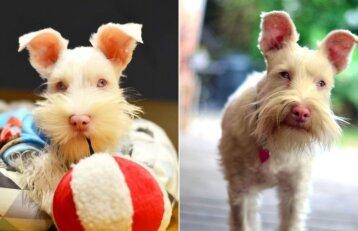 Nesijaučia kitoks nei visi: paliktas šuo albinosas laimę rado kitoje šeimoje