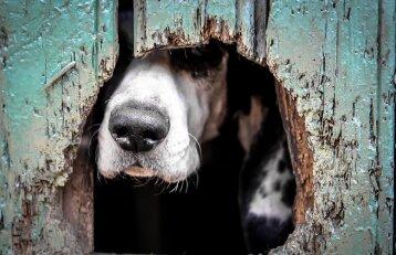Šuo – geriausias žmogaus draugas, bet ne paštininko