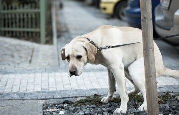 Nuomonė. Šunų šeimininkus reikia taip bausti, kad maža nepasirodytų!