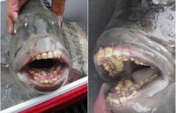 """Susipažinkite su unikalia žuvimi: jos """"šypsena"""" – visai kaip žmogaus"""