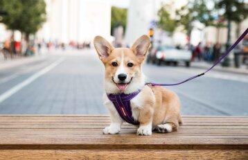 Kada pradėti dresuoti savo šunį?