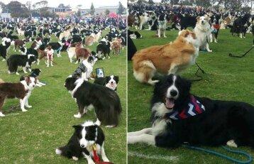 Parkas virto šunų rojumi: jame vienu metu buvo beveik 600 keturkojų