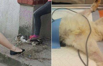 Pasklido šokiruojanti katės gaudymo operacija: feisbuke kilo tikra audra