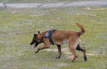 Šuns Ramzio bylos nagrinėjimas baigtas