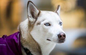 Kaip prailginti šuns gyvenimo trukmę?