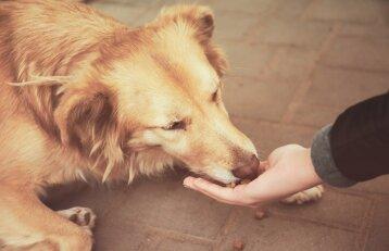 Atėjo pavojingas nuodų metas: gyvūnų apsinuodijimo požymiai ir pirmoji pagalba