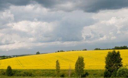 Lietuvos laukuose augantys rapsai – vietinė kultūra, kurią galite rasti ir savo kuro bake