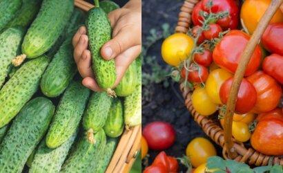 Šviežias derlius Lietuvoje: ar rekordinis šaltis nesutrukdė tiekti šiųmečio derliaus daržoves?