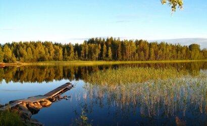 Rajonai, kur erkių daugiausia: važiuojantys prie ežerų ir jūros turėtų suklusti