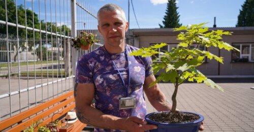 Kaip teisingai persodinti bonsą – meistras paaiškina, kas gali pražudyti medelį