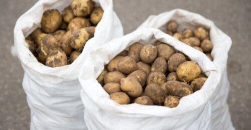 Kokios bulvių, medaus ir baravykų kainos provincijos turguje – vilniečius tai gali šokiruoti
