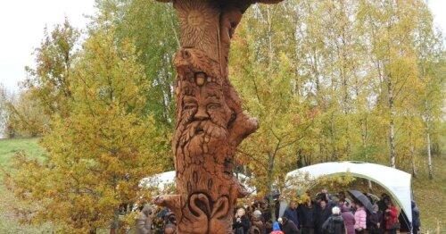 Ignalinos rajone prikeltas nulūžęs 300 metų senumo ąžuolas