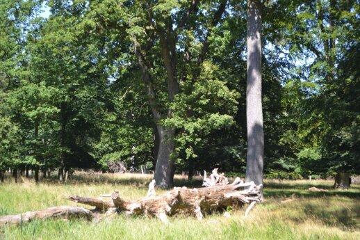 Jeigu tik įmanoma, palikite nuvirtųsį medį, jis bus dar labai naudingas gamtai.