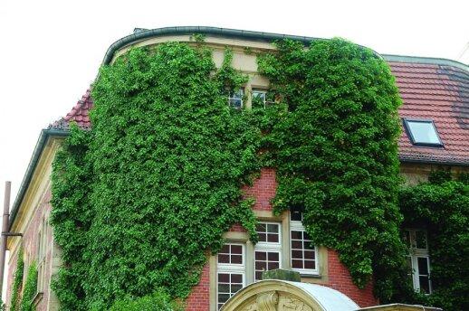 Sužinokite, kaip augalai gali pakenkti jūsų namui ar daugiabučiui