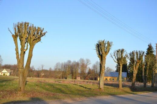 Ar taip geni medžius savo kieme geras šeimininkas? Liepos Višakio Rūdoje.
