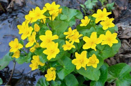 Ką verta žinoti apie tvenkinio augalus?