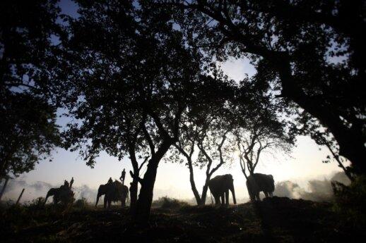 Čitvano nacionalinis parkas (Nepalas)
