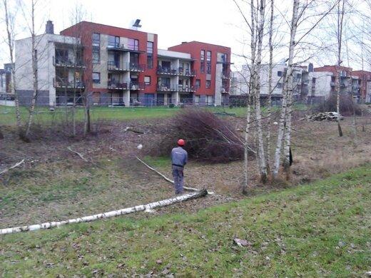 Iškirstas beržynas Santariškių rajone