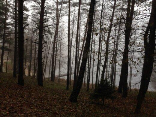 Prieš įsikuriant miške reikia gauti saugomos teritorijos vadovų leidimą