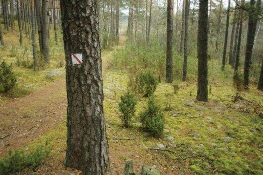 Toli gražu ne visi savininkai geba pasirūpinti turimais miškais