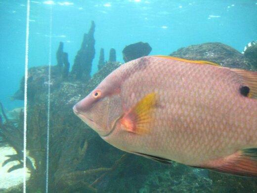Keisčiausios žuvys