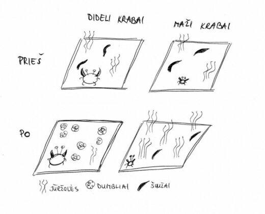 Atlikto eksperimento schema/ K. Simonaitytės iliustr.