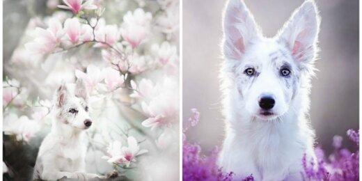 Gražūs šunys