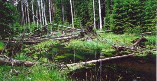 Viešvilės valstybinis gamtinis rezervatas/ Rezervato nuotr.