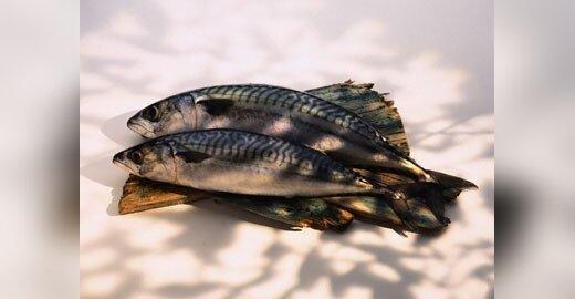 Briuselį papiktino Islandijos ir Farerų salų sprendimas žvejoti daugiau skumbrių
