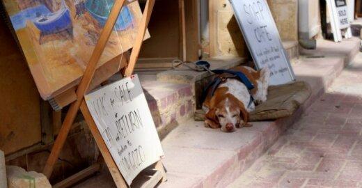Masinis benamių šunų naikinimas – kaip pateisinti?