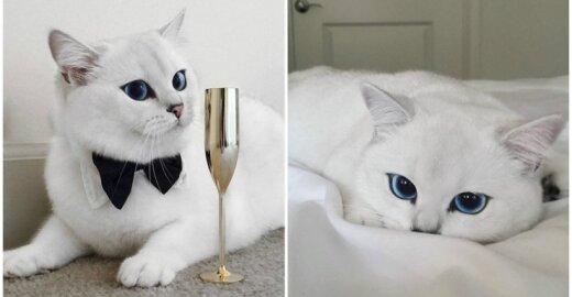Katė gražiomis akimis