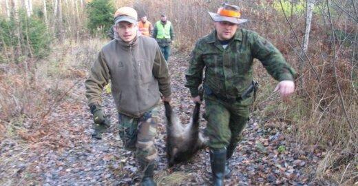 Kai nebeliks šernų, tikėtina, kad medžiotojai taikysis į stirnas
