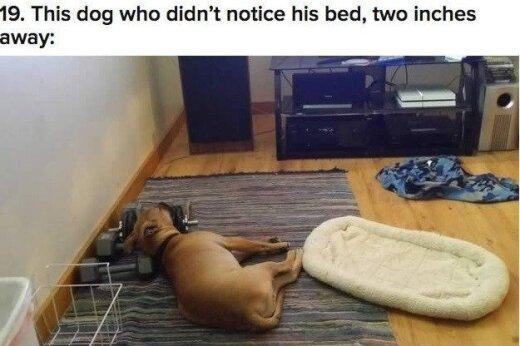 20 šunų, kurie savo gyvenime priėmė neteisingus sprendimus