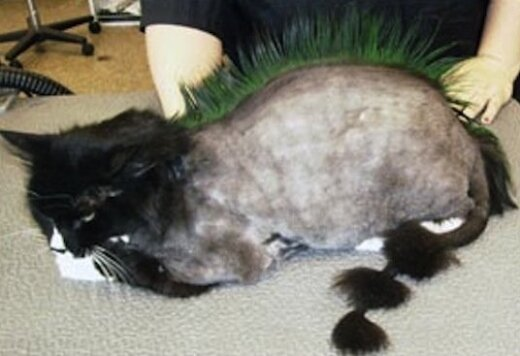 Katės, kurios neabejotinai nužudys savo šeimininkus