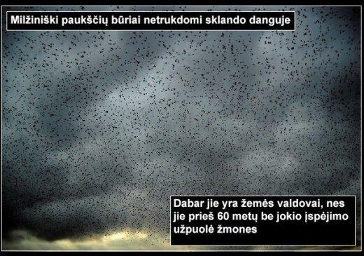 Ilgai slėpta paslaptis: visa tiesa apie paukščių karą
