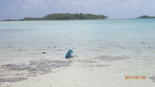Mažylis žaidžia tarp ryklių