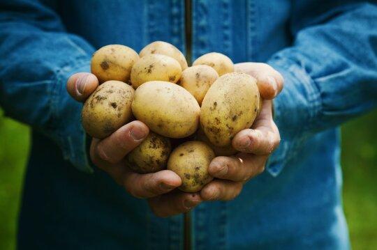 Ruošiamės žiemai – kaip kuo ilgiau išlaikyti įvairias daržoves ir kitas rudens gėrybes šviežias?