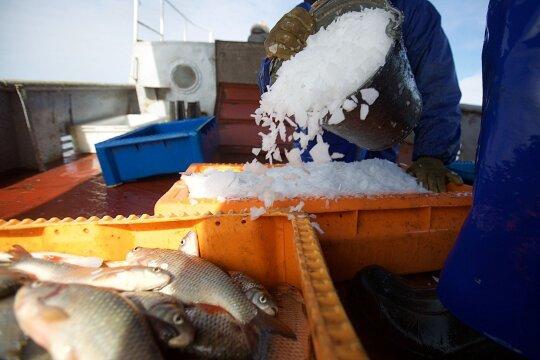 Perkantiems žuvį pataria būti atsargiems: taip laikoma ji gali sugesti akimirksniu