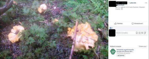 Grybautojai dalinasi grybų nuotraukomis žiemą