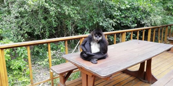 Nepakartojama Afrika: lietuvius stebino beždžionių elgesys ir nuo tiltų šokinėjantys turistai
