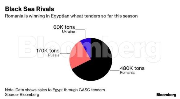 Rusija tampa duonkepio svajone: šalis džiaugiasi aukščiausios rūšies kviečių pertekliumi