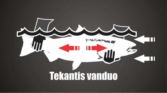 Kaip paleisti žuvį