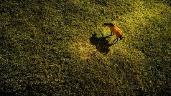Fotografo darbai nepalieka abejingų: Lietuvos grožis verčia aikčioti visą pasaulį
