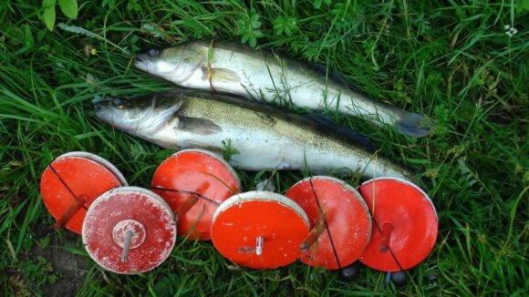 Konfiskuotos žuvys