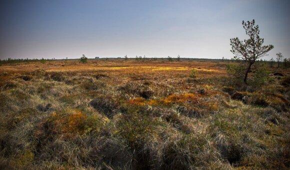 Čepkeliai marsh