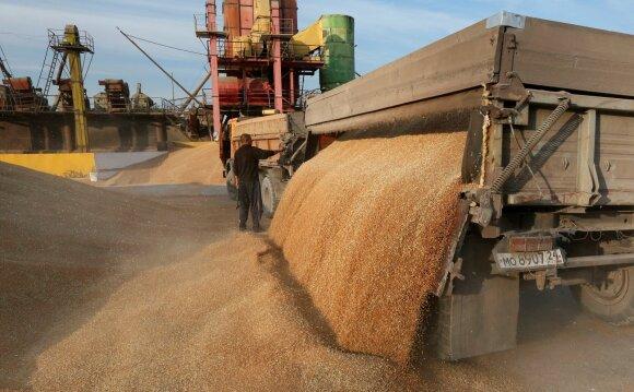 Rusijos ūkininkai nuima kviečių derlių