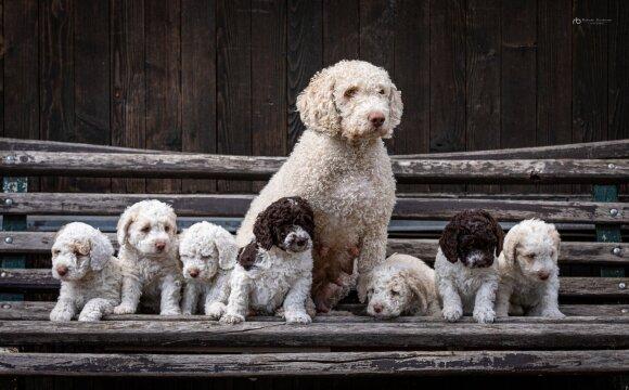 Julia Jershova ir šunys