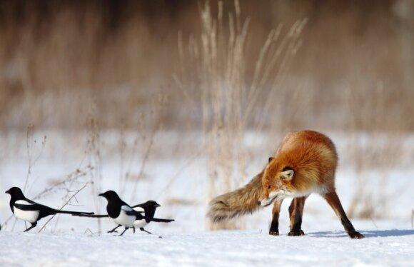 Geriausios 2013-ųjų metų gamtos fotografų nuotraukos
