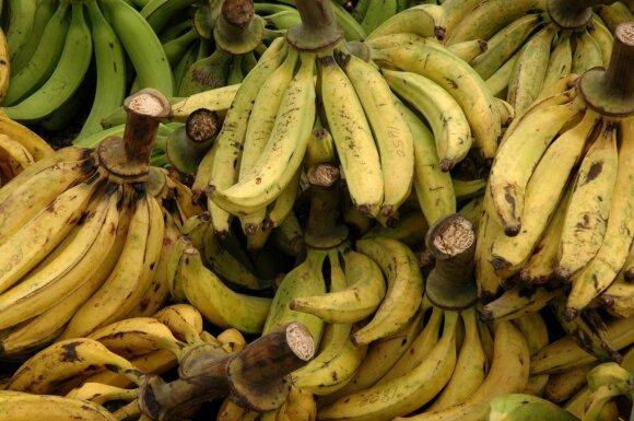 Plantano rūšies bananai